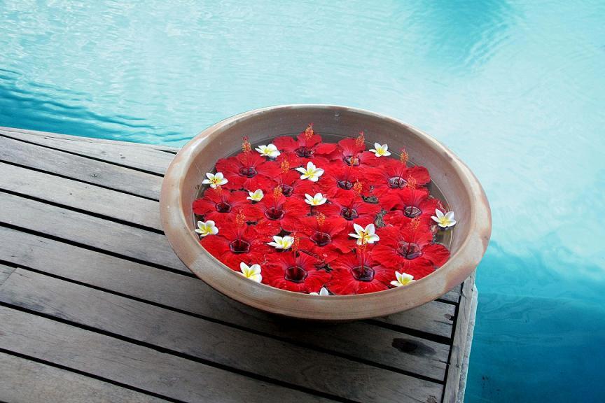 Hibiscus-et-piscine