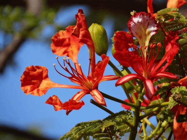 Vacances à l'île maurice