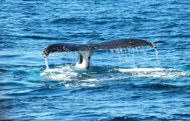Baleine île Maurice