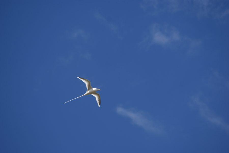 bird-422927